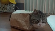 Котето Мару облечен в хартиена торбичка