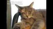 Котка Сънува Нещо