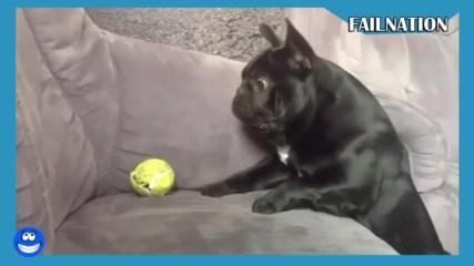 Кучешки изцепки - Много смях