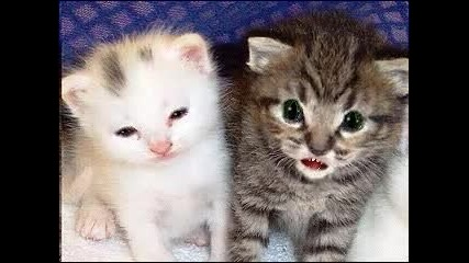 Two Little Fun Cats Vbox7!!