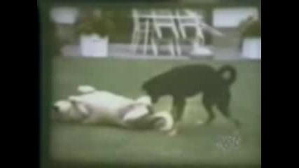 Animal Humping