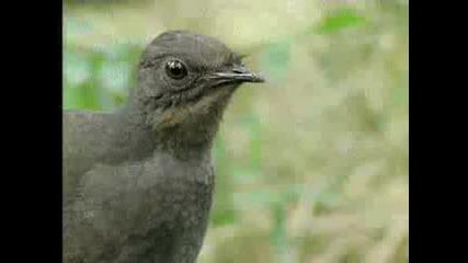 Вижте тази птица какъв талант е