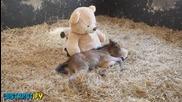 Най - сладките моменти с животни - 2013