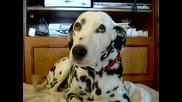 Куче Се Усмихва :)
