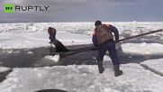Rescue Workers Jump Into Shallow Water to Free Orcas Trapped in Ice Floes