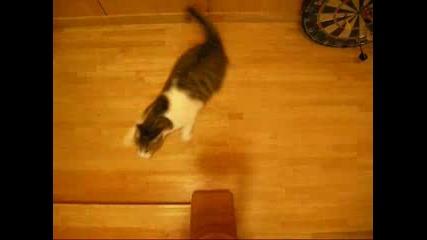 Котка От Рали Шампионата