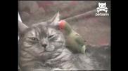 Обичта между котка и папагал