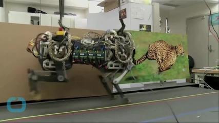 MIT's Jumping Robot Cheetah Will Keep You Awake at Night