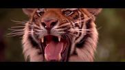 Бг Аудио * Книга за джунглата * 7 / 7 (1994) Rudyard Kipling's The Jungle Book [ hdtv ] Xxxyz