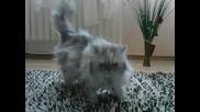 котка в плик