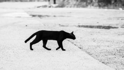 10 странни суеверия от цял свят