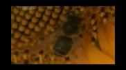 Проблема с измирането на пчелите