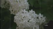 Vitalii Doronin Rascvela sireny - cheremuha v sadu