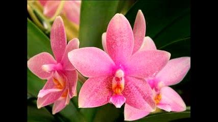 Цветя - Flowers