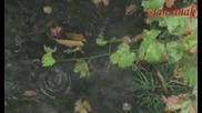 Асен Масларски След Дъжда