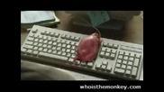 Реклама - Смях
