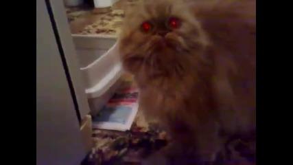 доста изтрещяла котка..вижте сами!!!!