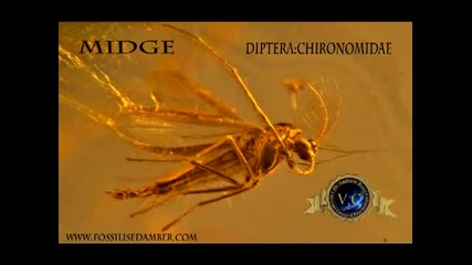 Insects In Amber- Evidence Of Life