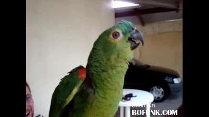 Яко Смях [!]~папагал опрен певец~[!]
