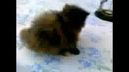 Сладки котенца 2