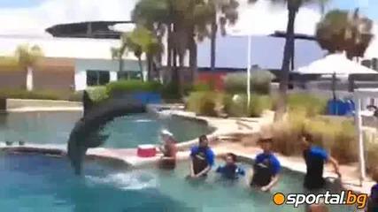 Делфин вкара дузпа на Валдес