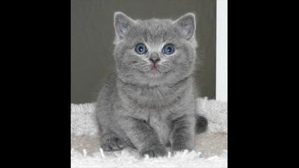 smeshni i sladki kotki