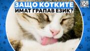 Защо котките имат грапав език?