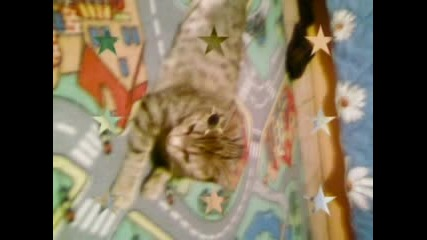 ~*~*~My Sweety Kitten~*~*~