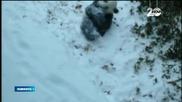 Панда в зоопарка във Вашингтон видя за пръв път сняг