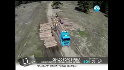 Незаконна сеч. Кой изсича горите - Здравей, България (18.04.2014г.)