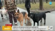 Кой трови кучета из парковете на София?