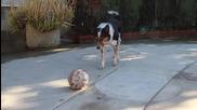 Най - умното куче на света