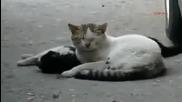 Котка се опитва да спаси любовта си
