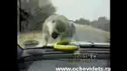 Ох,  банана,  ах банана!!!