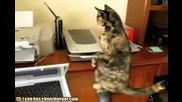Котка се стряска от работещ принтер