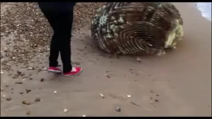 Цунамито изхвърли на брега странно същество
