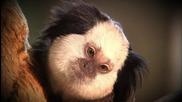 Бебета в зоопарка (Zoo Juniors) S03E05