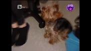 Нашите момичета звезди от корици - 20.11.2010 - част 1