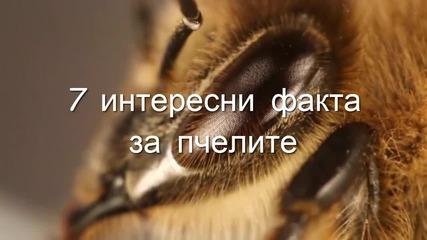 7 интересни факта за пчелите