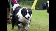 Кучета на Забавен Кадър