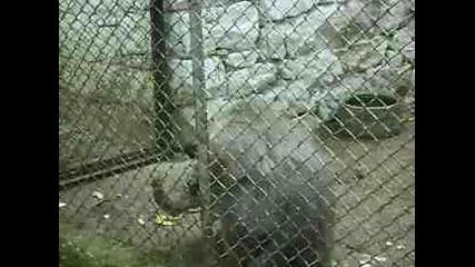 маймуна си хапва джанки