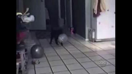Най-щурите котки