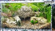 Моите аквариуми - вече на година