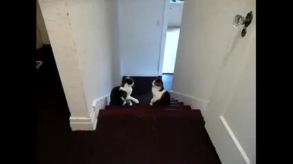 Боксов мач с котки - Смях