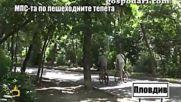 Нагли пловдивски шофьори превръщат парк в паркинг