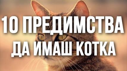 10 предимства да имаш котка