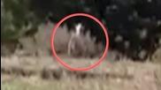 Слендър ??? Тийнейджъри били в гората и заснели неизвестно същество!