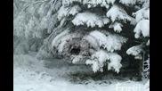 Татьяна Богачева - Зима