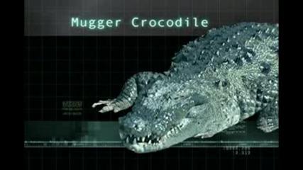 Крокодилите - 23 Вида Населяват Земята - Виж !