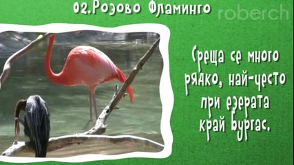 10 животни, за които не предполагахте, че се срещат в България